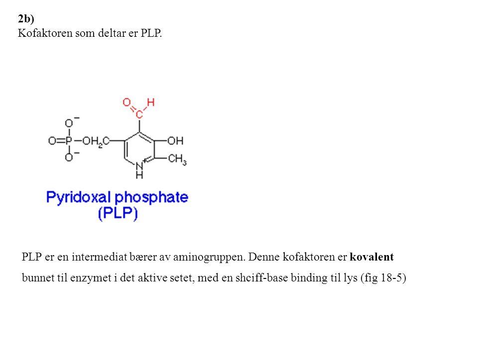 Transaminering/ureasyklus Oppgave 1, V-02 A) To aminosyrer spiller en sentral rolle i transport av aminogrupper/NH 4 + til leveren.