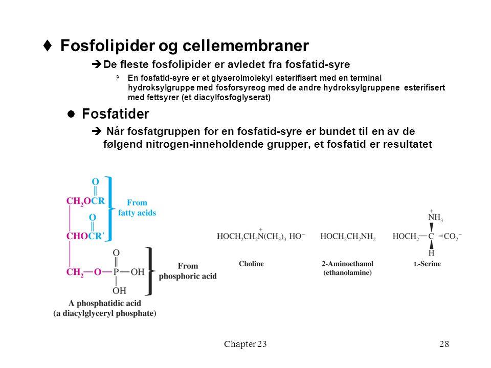 Chapter 2328  Fosfolipider og cellemembraner  De fleste fosfolipider er avledet fra fosfatid-syre  En fosfatid-syre er et glyserolmolekyl esterifis