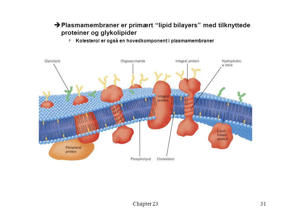 """Chapter 2331  Plasmamembraner er primært """"lipid bilayers"""" med tilknyttede proteiner og glykolipider  Kolesterol er også en hovedkomponent i plasmame"""