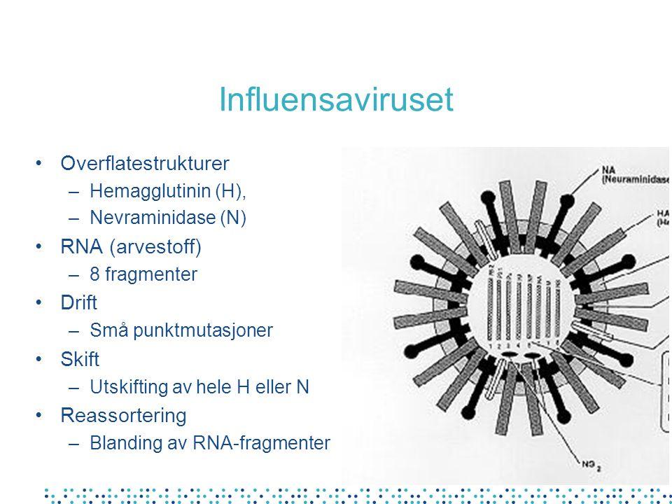 Influensaviruset Overflatestrukturer –Hemagglutinin (H), –Nevraminidase (N) RNA (arvestoff) –8 fragmenter Drift –Små punktmutasjoner Skift –Utskifting av hele H eller N Reassortering –Blanding av RNA-fragmenter