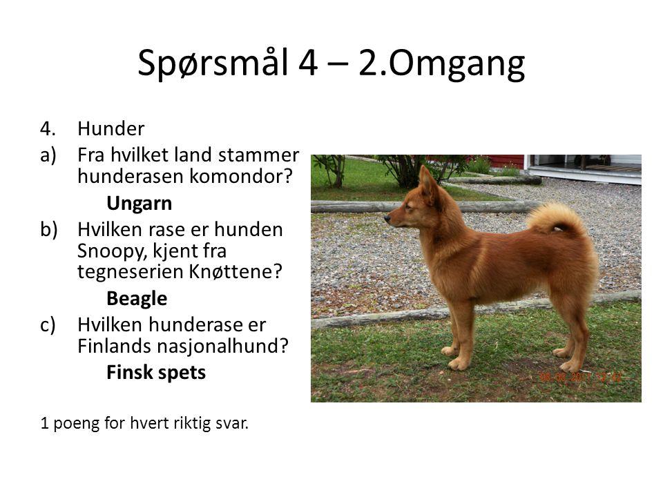 Spørsmål 4 – 2.Omgang 4.Hunder a)Fra hvilket land stammer hunderasen komondor? Ungarn b)Hvilken rase er hunden Snoopy, kjent fra tegneserien Knøttene?