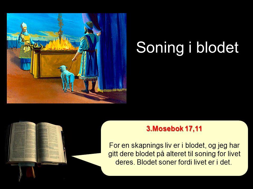 Soning i blodet 3.Mosebok 17,11 For en skapnings liv er i blodet, og jeg har gitt dere blodet på alteret til soning for livet deres.