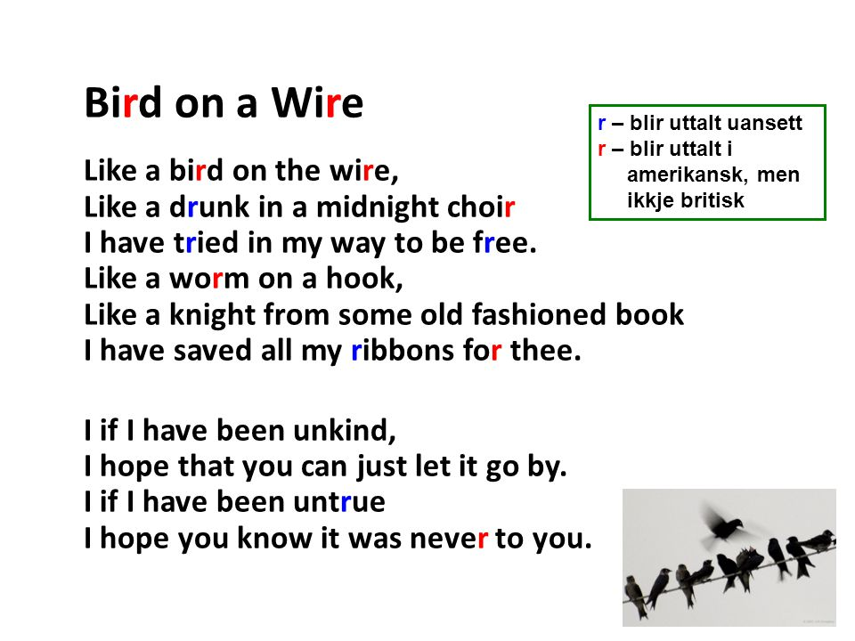 Bird on a Wire Like a bird on the wire, Like a drunk in a midnight choir I have tried in my way to be free.