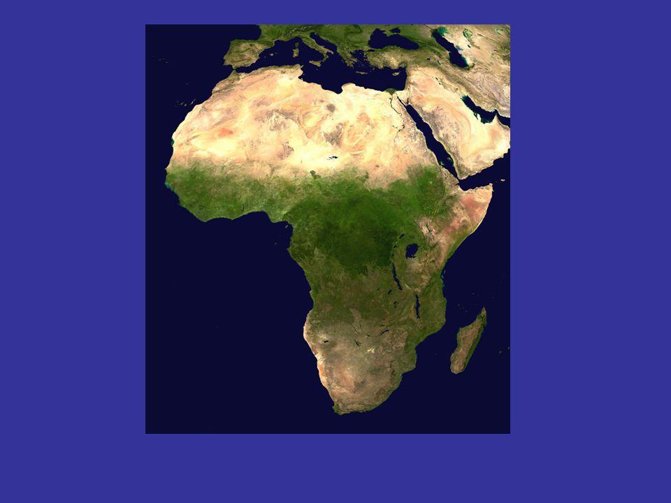 Olduvai-funnene Første funn av selve menneskearten : 2 mill.
