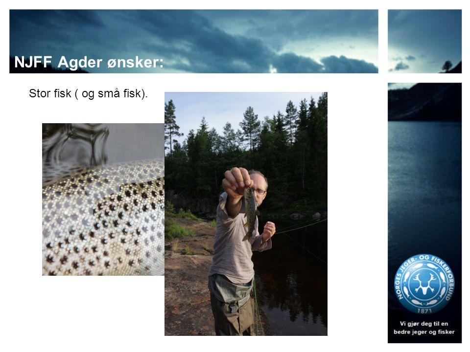 NJFF Agder ønsker: Stor fisk ( og små fisk).