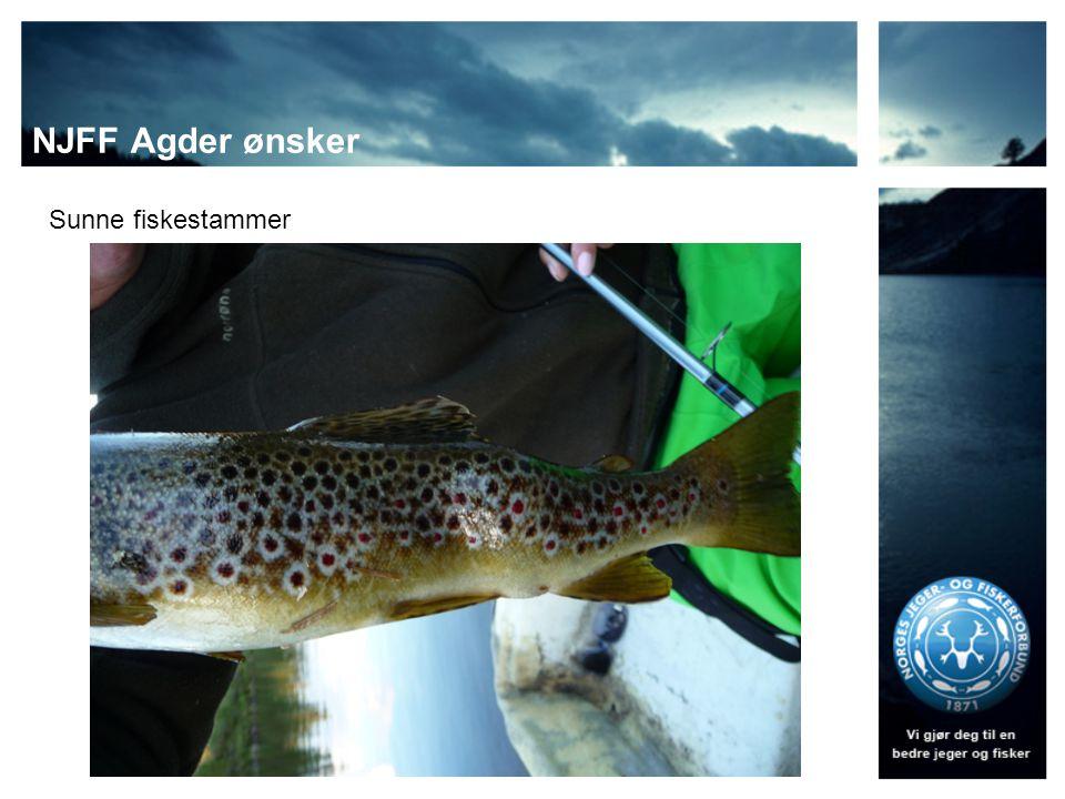 NJFF Agder ønsker Sunne fiskestammer