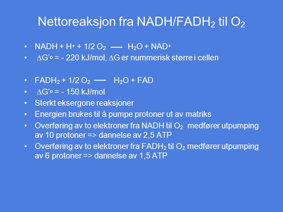 Nettoreaksjon fra NADH/FADH 2 til O 2 NADH + H + + 1/2 O 2 H 2 O + NAD +  G' o = - 220 kJ/mol,  G er nummerisk større i cellen FADH 2 + 1/2 O 2 H 2