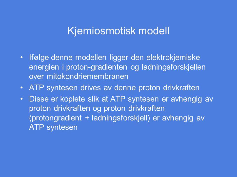 Kjemiosmotisk modell Ifølge denne modellen ligger den elektrokjemiske energien i proton-gradienten og ladningsforskjellen over mitokondriemembranen AT