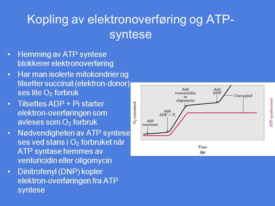Kopling av elektronoverføring og ATP- syntese Hemming av ATP syntese blokkerer elektronoverføring Har man isolerte mitokondrier og tilsetter succinat