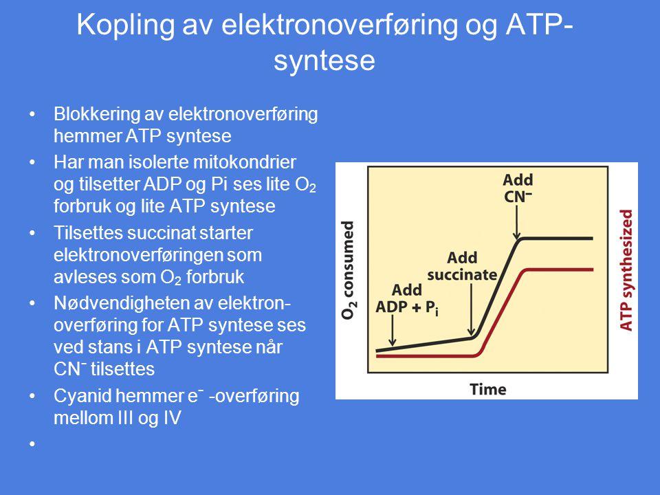 Kopling av elektronoverføring og ATP- syntese Blokkering av elektronoverføring hemmer ATP syntese Har man isolerte mitokondrier og tilsetter ADP og Pi