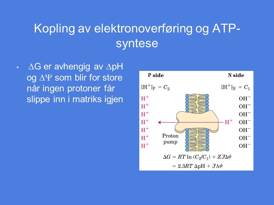 Kopling av elektronoverføring og ATP- syntese  G er avhengig av  pH og  som blir for store når ingen protoner får slippe inn i matriks igjen