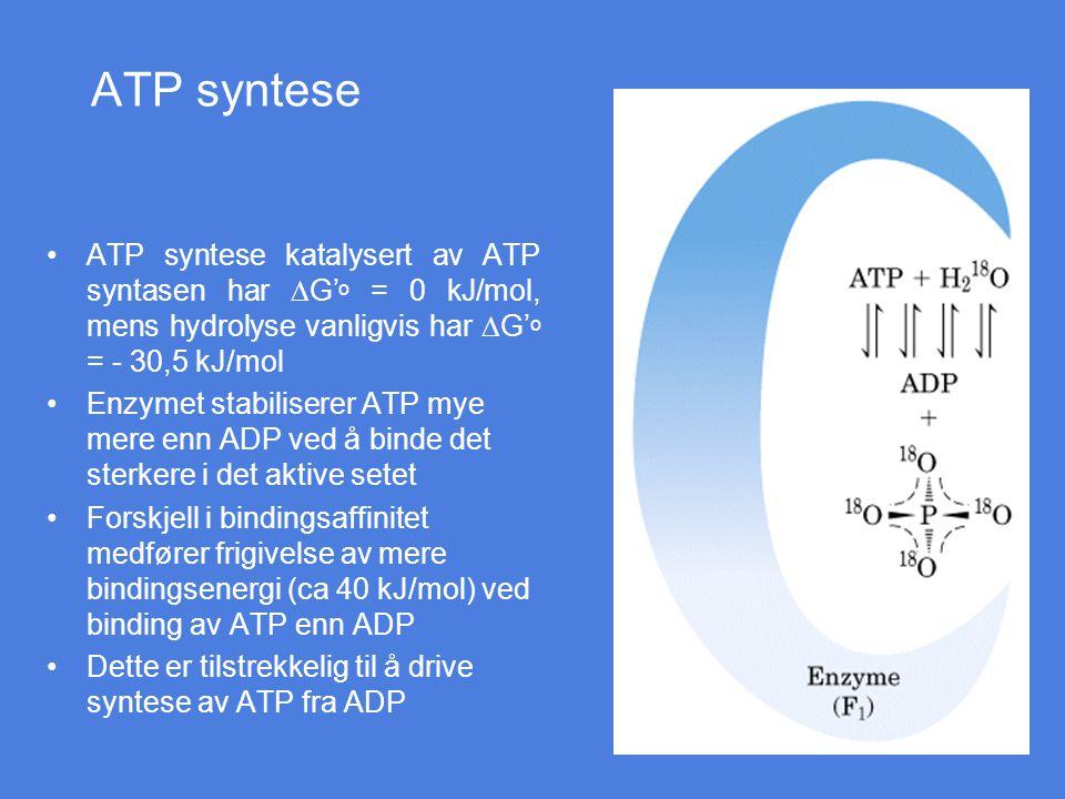 ATP syntese ATP syntese katalysert av ATP syntasen har  G' o = 0 kJ/mol, mens hydrolyse vanligvis har  G' o = - 30,5 kJ/mol Enzymet stabiliserer ATP