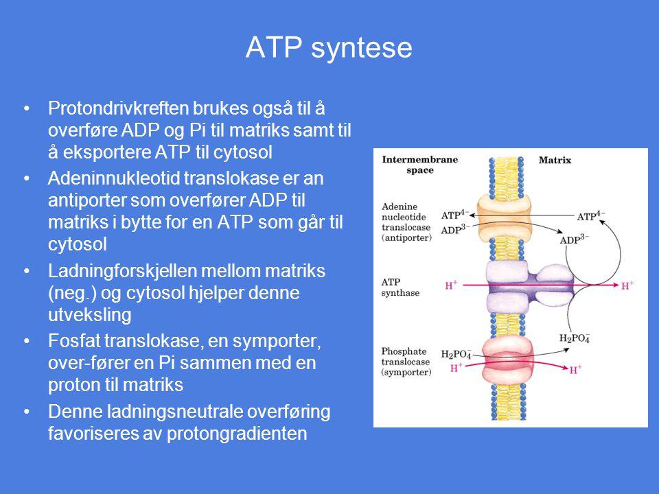 ATP syntese Protondrivkreften brukes også til å overføre ADP og Pi til matriks samt til å eksportere ATP til cytosol Adeninnukleotid translokase er an