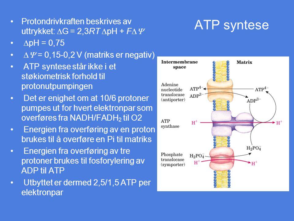 ATP syntese Protondrivkraften beskrives av uttrykket:  G = 2,3RT  pH + F   pH = 0,75  = 0,15-0,2 V (matriks er negativ) ATP syntese står ikke i
