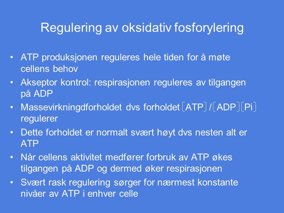 Regulering av oksidativ fosforylering ATP produksjonen reguleres hele tiden for å møte cellens behov Akseptor kontrol: respirasjonen reguleres av tilg