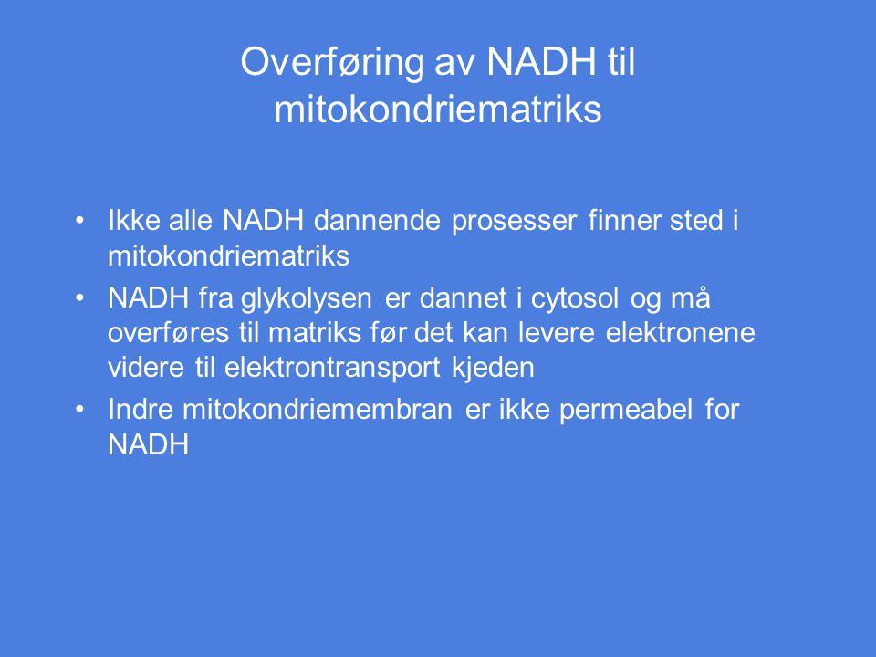 Overføring av NADH til mitokondriematriks Ikke alle NADH dannende prosesser finner sted i mitokondriematriks NADH fra glykolysen er dannet i cytosol o