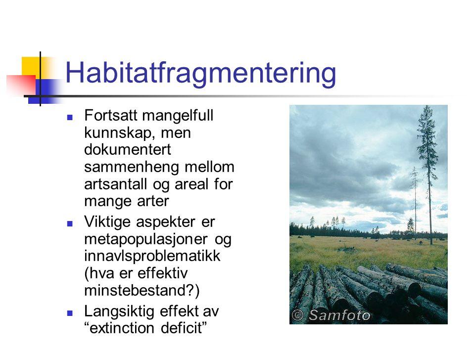 Farlig å være få Små habitater gir færre arter 90% redusert areal gir 50% færre arter Små habitater gir mindre populasjoner av hver art Mindre populas