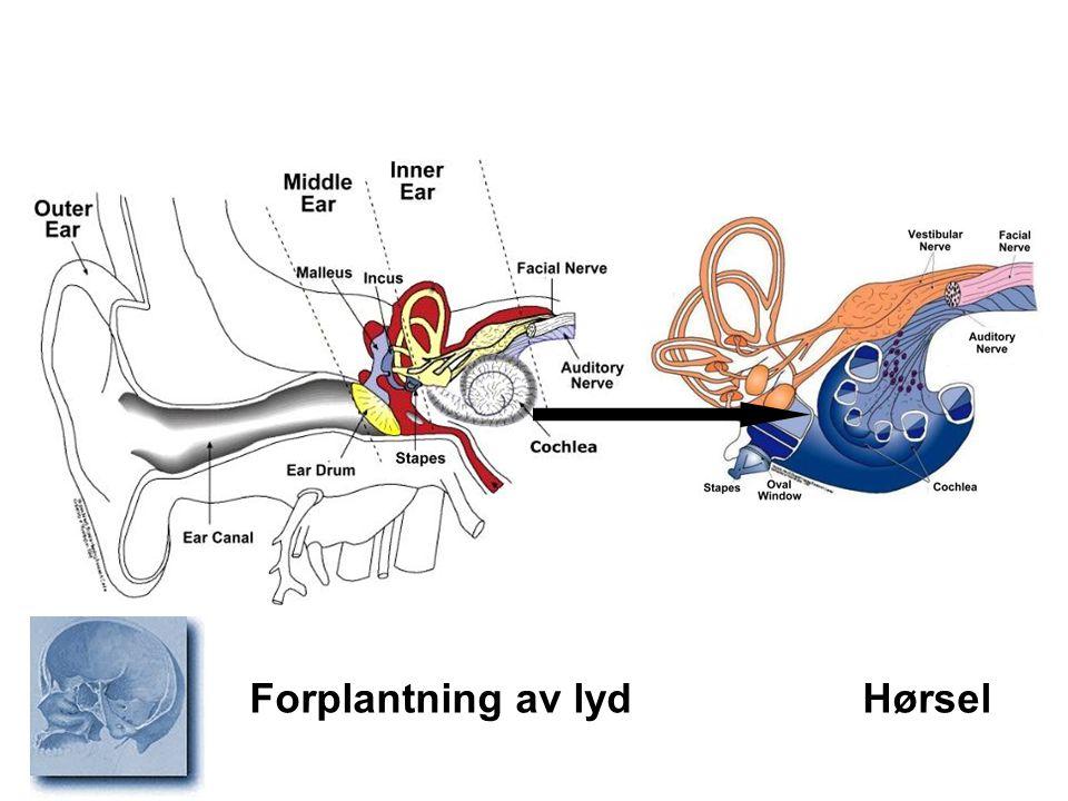 Anomalier Leppe/ganespalte Uvula bifida Infeksjon Pharyngitt Tonsillitt Peritonsillær abscess Tumor Munnhulekreft Traume Epistaxis Sykdommer munnhule/svelg