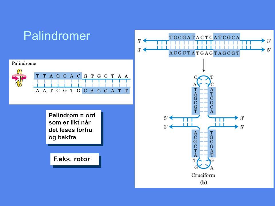 Palindromer F.eks. rotor Palindrom = ord som er likt når det leses forfra og bakfra
