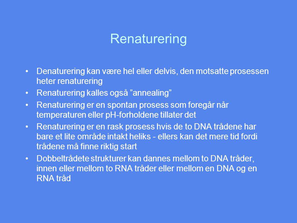 Renaturering Denaturering kan være hel eller delvis, den motsatte prosessen heter renaturering Renaturering kalles også annealing Renaturering er en spontan prosess som foregår når temperaturen eller pH-forholdene tillater det Renaturering er en rask prosess hvis de to DNA trådene har bare et lite område intakt heliks - ellers kan det mere tid fordi trådene må finne riktig start Dobbeltrådete strukturer kan dannes mellom to DNA tråder, innen eller mellom to RNA tråder eller mellom en DNA og en RNA tråd