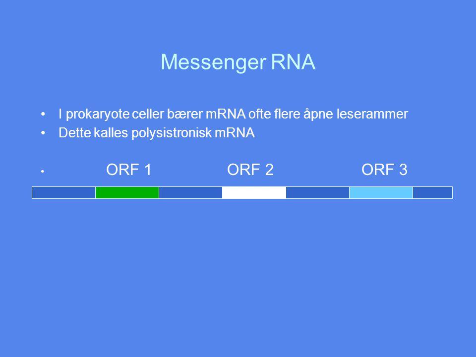 Messenger RNA I prokaryote celler bærer mRNA ofte flere åpne leserammer Dette kalles polysistronisk mRNA ORF 1 ORF 2 ORF 3