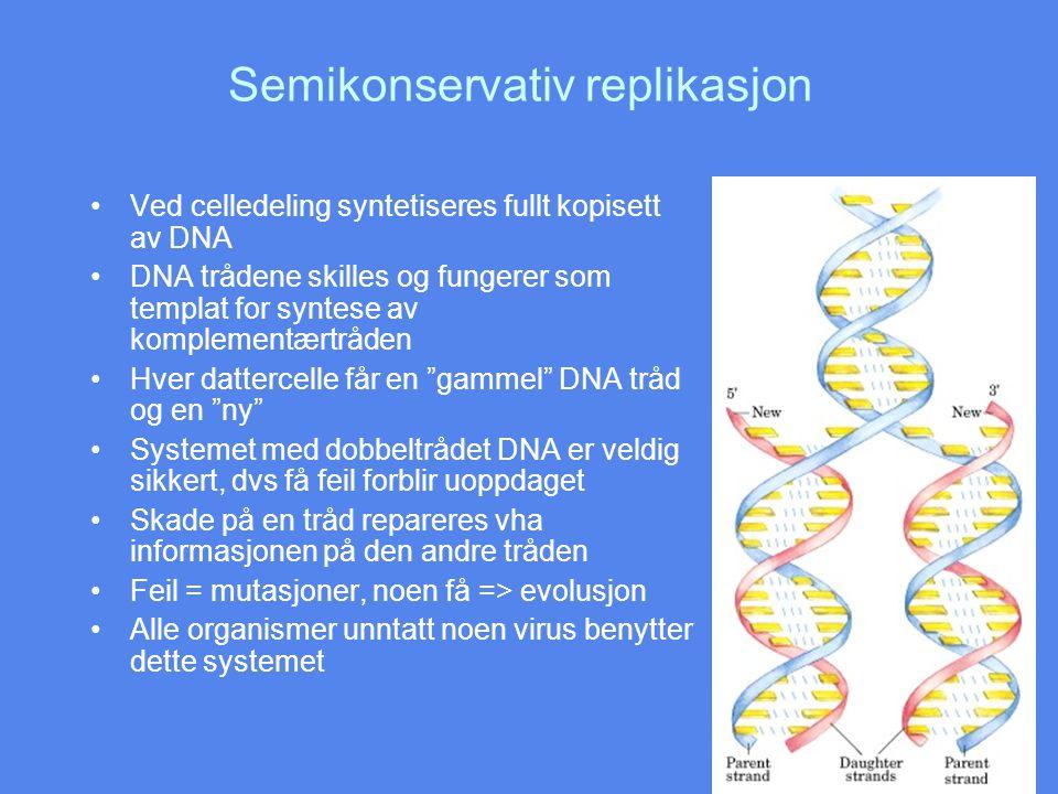 Varmedenaturering Denatureringstemperaturen avhenger av flere forhold: Viktigst er nukleotidsekvensen Det krever mere energi å bryte et CG basepar enn et AT basepar, fordi CG har tre hydrogenbindinger mens AT bare har to Lengden på DNA molekylet spiller også inn, mest relevant in vitro In vivo foregår denaturering i forbindelse med replikasjon og transkripsjon Denatureringstemperatur er høyest for RNA:RNA, lavere for RNA:DNA og lavest for DNA:DNA.