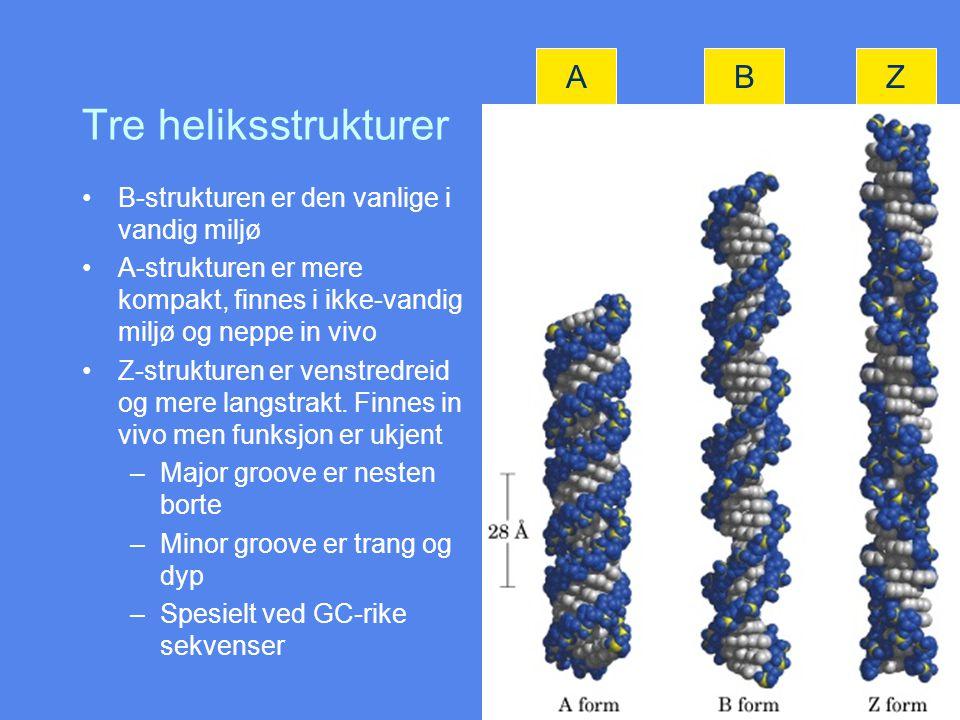 Tre heliksstrukturer B-strukturen er den vanlige i vandig miljø A-strukturen er mere kompakt, finnes i ikke-vandig miljø og neppe in vivo Z-strukturen