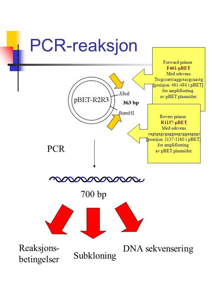 PCR-reaksjon Forward primer F461-pBET Med sekvens Ttcgccattcaggctacgcaactg [posisjon 461-484 i pBET] for amplifisering av pBET plasmider.