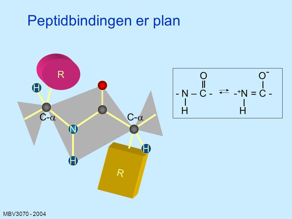 MBV3070 - 2004 Peptidbindingen er plan R C-  N R H H H O O - - N – C - - + N = C - H H