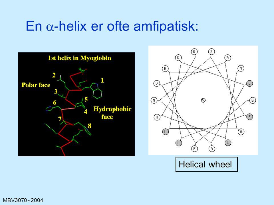 MBV3070 - 2004 En  -helix er ofte amfipatisk: Helical wheel
