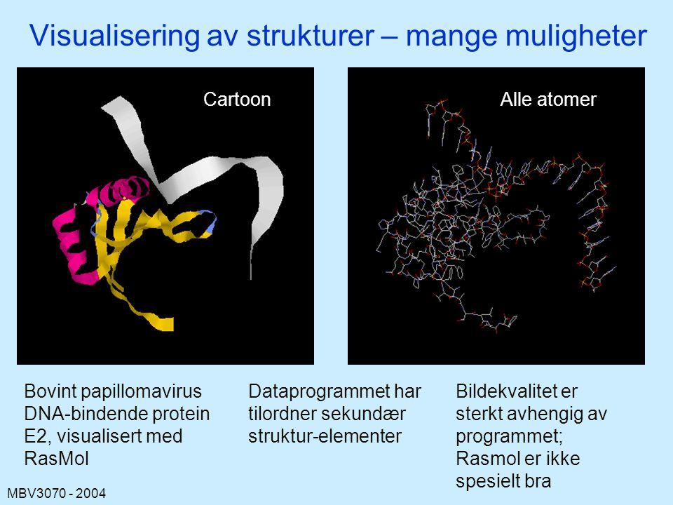 MBV3070 - 2004 Visualisering av strukturer – mange muligheter Bovint papillomavirus DNA-bindende protein E2, visualisert med RasMol Dataprogrammet har tilordner sekundær struktur-elementer Bildekvalitet er sterkt avhengig av programmet; Rasmol er ikke spesielt bra CartoonAlle atomer