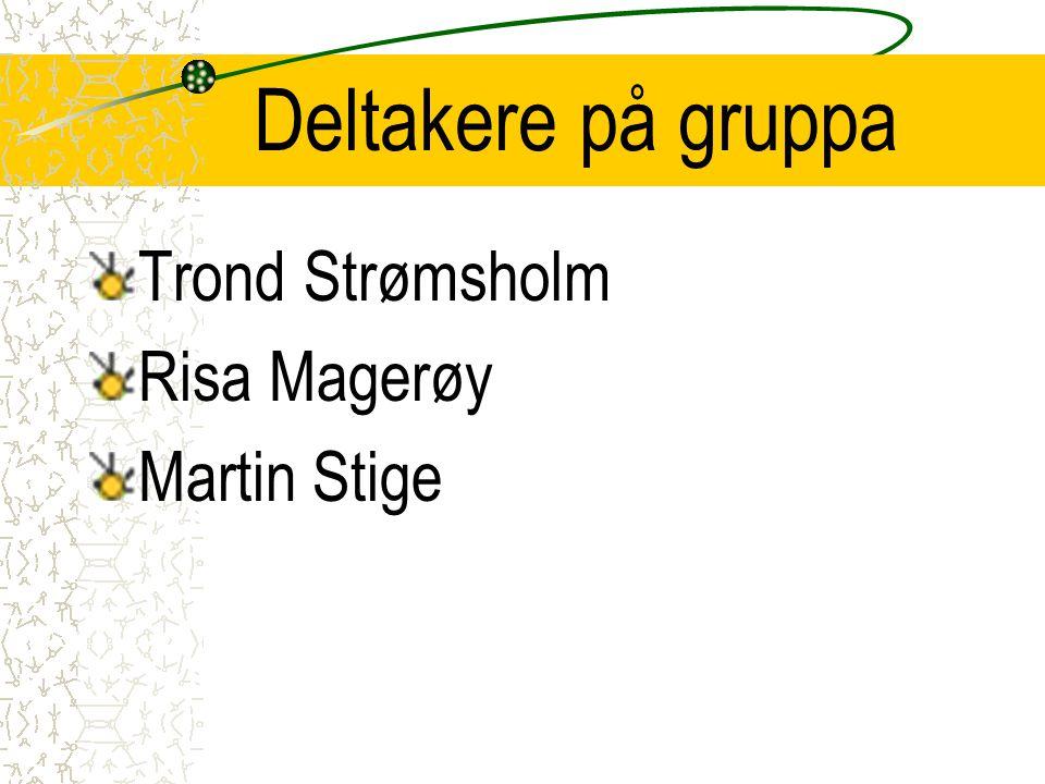 Deltakere på gruppa Trond Strømsholm Risa Magerøy Martin Stige