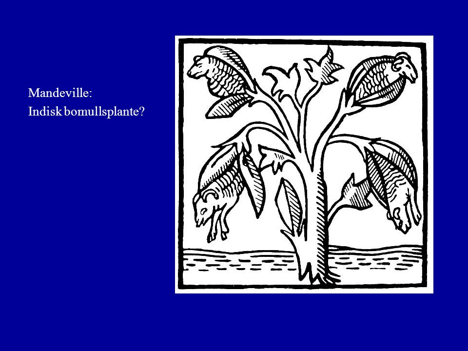 Mandeville: Indisk bomullsplante