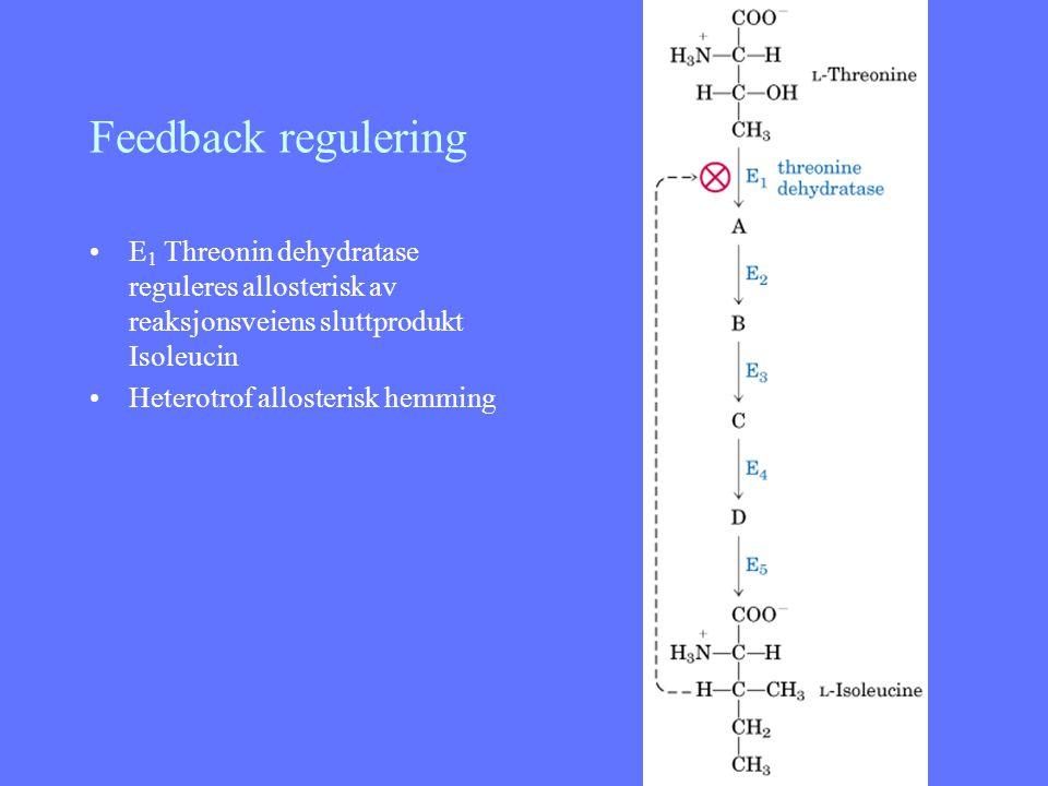 Feedback regulering E 1 Threonin dehydratase reguleres allosterisk av reaksjonsveiens sluttprodukt Isoleucin Heterotrof allosterisk hemming