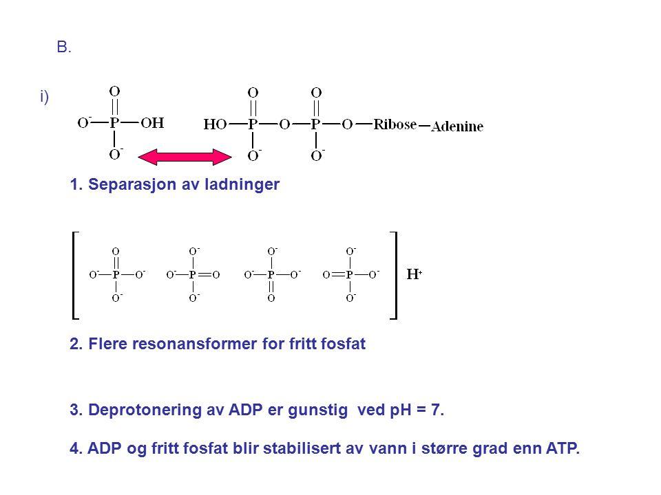 B.i) 1. Separasjon av ladninger 2. Flere resonansformer for fritt fosfat 3.