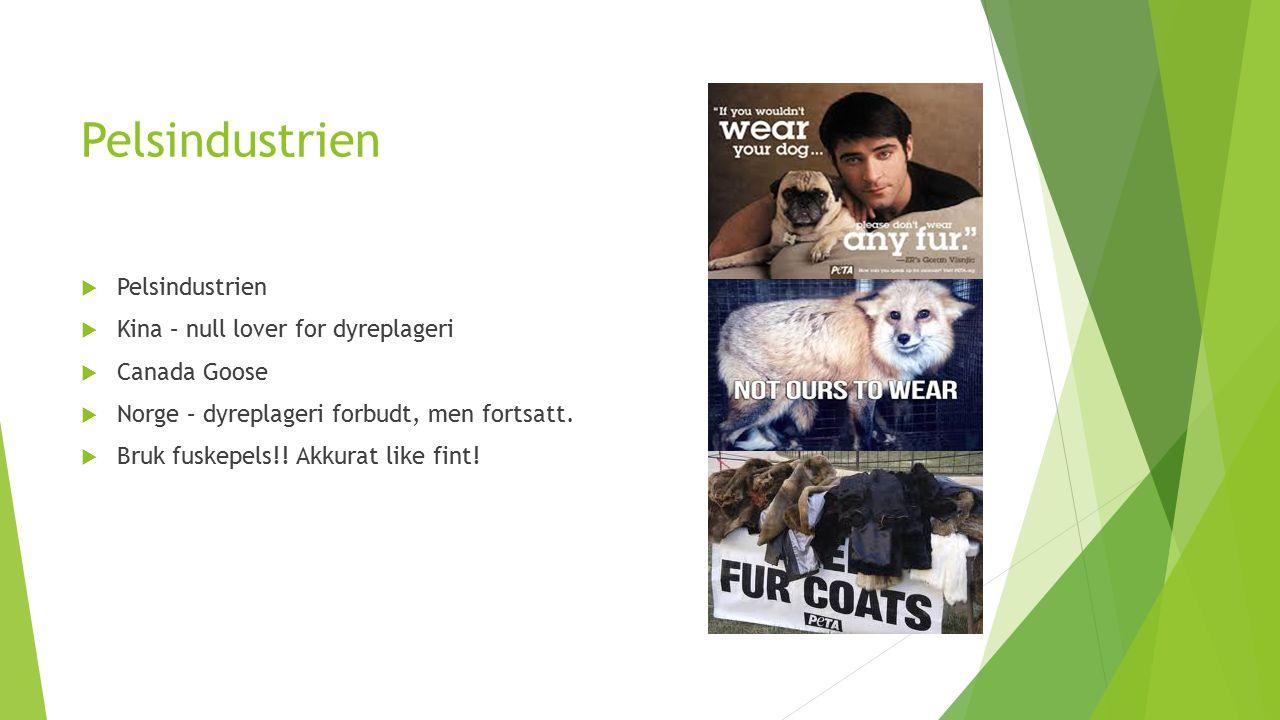 Pelsindustrien  Pelsindustrien  Kina – null lover for dyreplageri  Canada Goose  Norge – dyreplageri forbudt, men fortsatt.