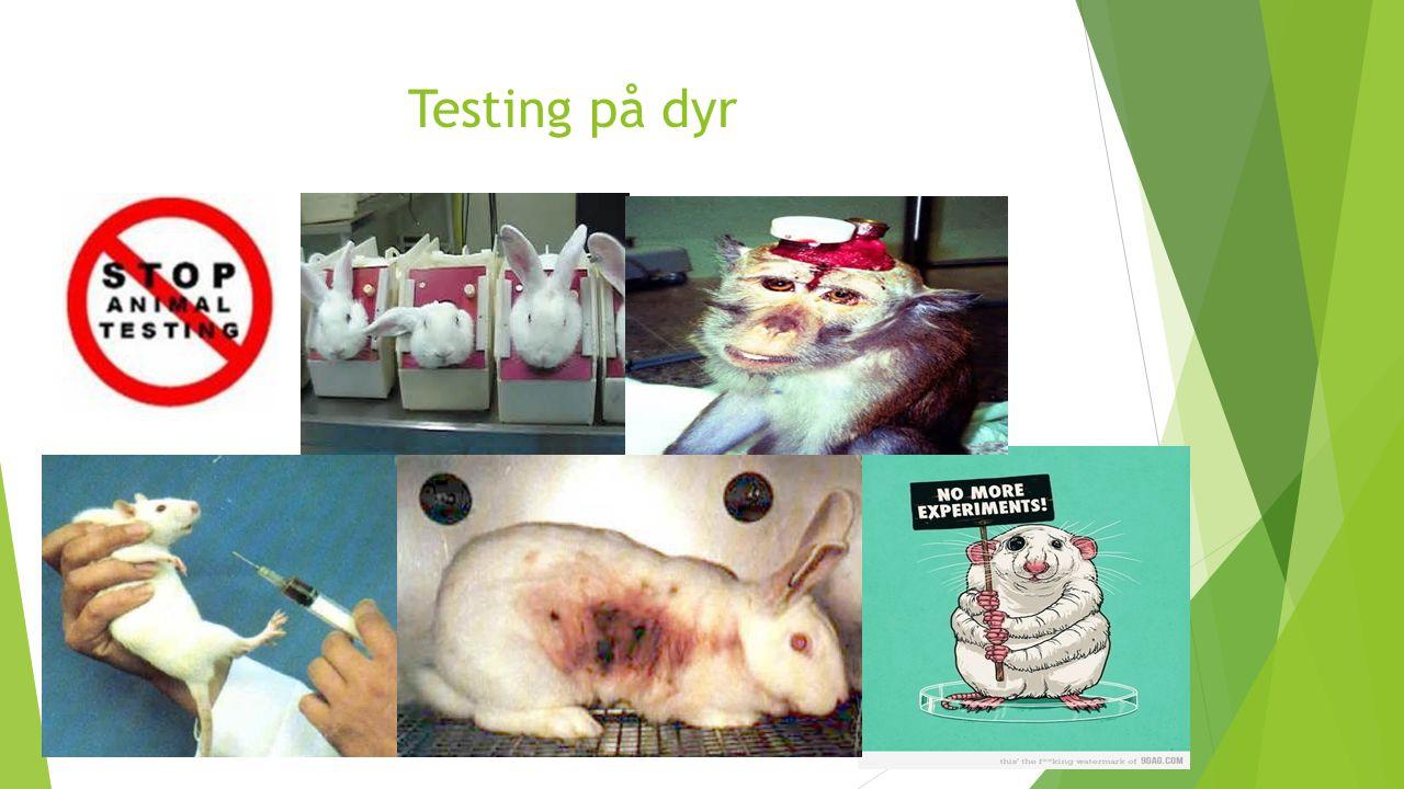 Testing på dyr