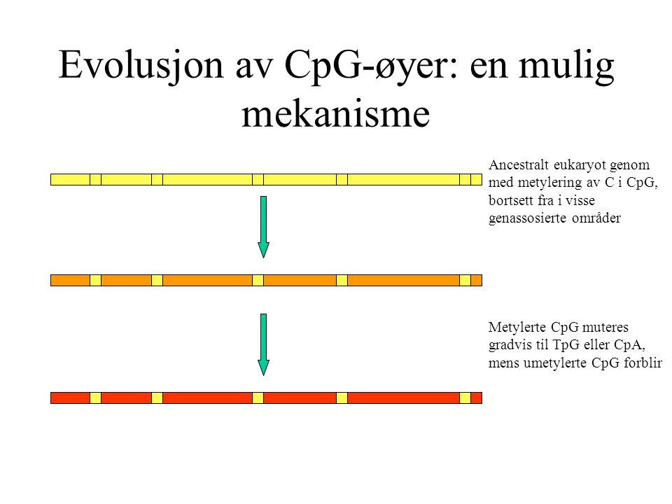 Evolusjon av CpG-øyer: en mulig mekanisme Ancestralt eukaryot genom med metylering av C i CpG, bortsett fra i visse genassosierte områder Metylerte Cp
