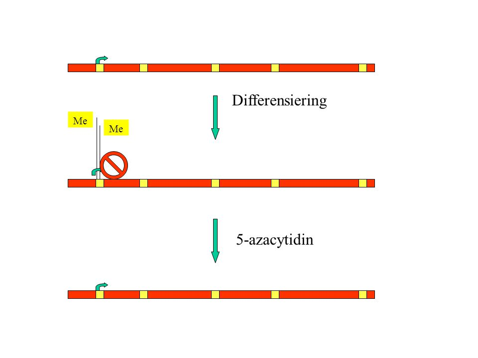 Me Differensiering 5-azacytidin