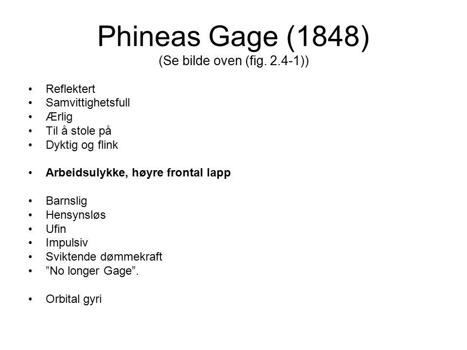 Phineas Gage (1848) (Se bilde oven (fig. 2.4-1)) Reflektert Samvittighetsfull Ærlig Til å stole på Dyktig og flink Arbeidsulykke, høyre frontal lapp B