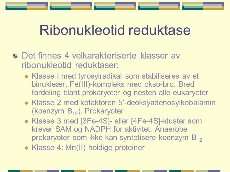 Ribonukleotid reduktase Det finnes 4 velkarakteriserte klasser av ribonukleotid reduktaser: Klasse I med tyrosylradikal som stabiliseres av et binukle