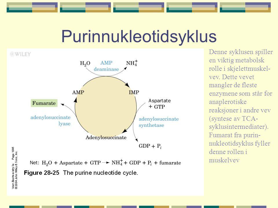 Purinnukleotidsyklus Denne syklusen spiller en viktig metabolsk rolle i skjelettmuskel- vev. Dette vevet mangler de fleste enzymene som står for anapl