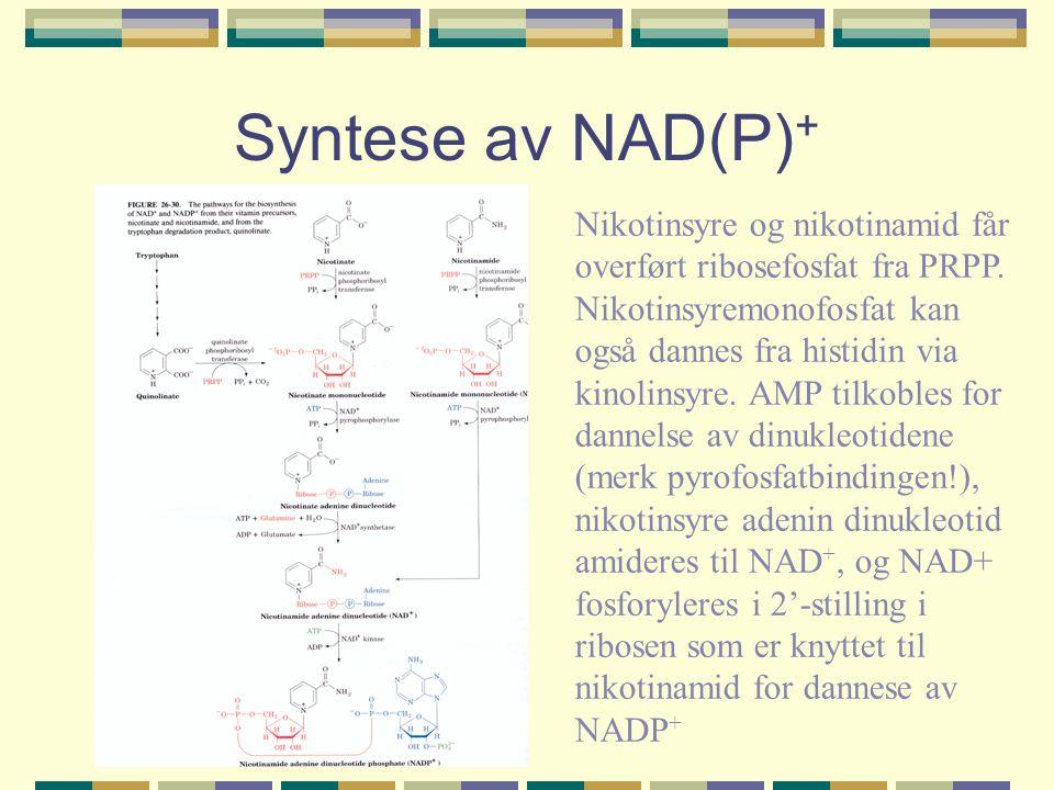 Syntese av NAD(P) + Nikotinsyre og nikotinamid får overført ribosefosfat fra PRPP. Nikotinsyremonofosfat kan også dannes fra histidin via kinolinsyre.