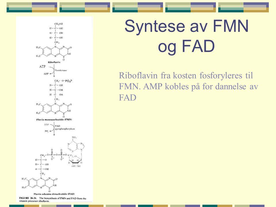 Syntese av FMN og FAD ATP Riboflavin fra kosten fosforyleres til FMN. AMP kobles på for dannelse av FAD