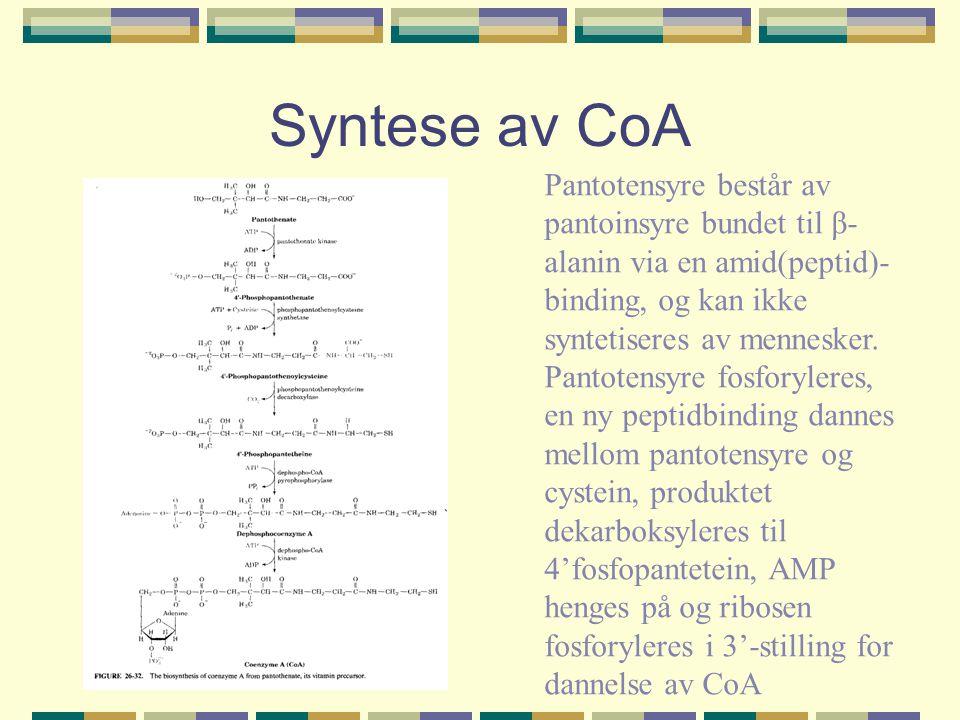 Syntese av CoA Pantotensyre består av pantoinsyre bundet til β- alanin via en amid(peptid)- binding, og kan ikke syntetiseres av mennesker. Pantotensy