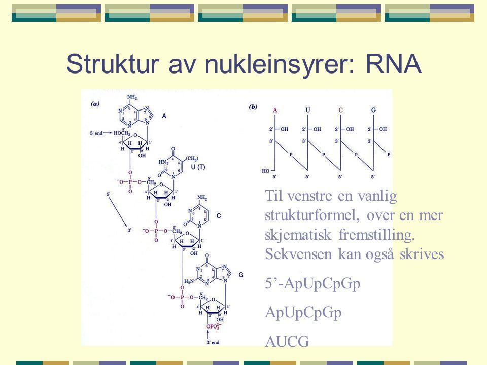 Struktur av nukleinsyrer: RNA Til venstre en vanlig strukturformel, over en mer skjematisk fremstilling. Sekvensen kan også skrives 5'-ApUpCpGp ApUpCp