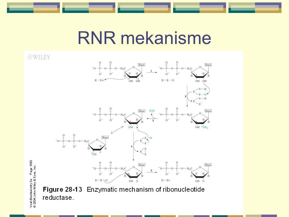 Reduksjon av RNR From Mathews and van Holde: Biochemistry 2 nd Ed.