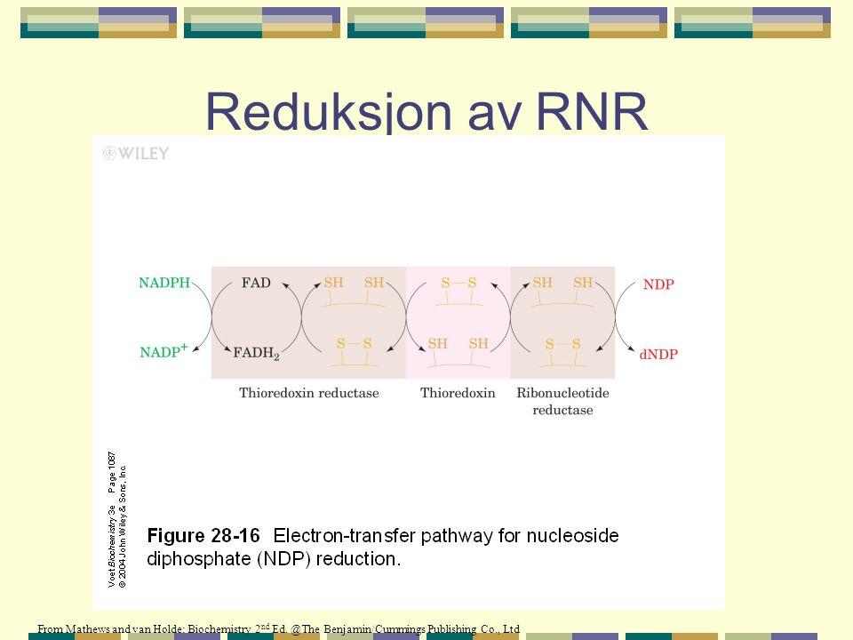 Reduksjon av RNR From Mathews and van Holde: Biochemistry 2 nd Ed. @The Benjamin/Cummings Publishing Co., Ltd