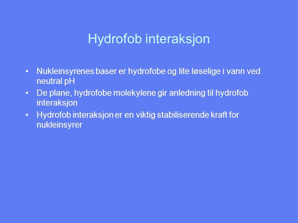 Hydrofob interaksjon Nukleinsyrenes baser er hydrofobe og lite løselige i vann ved neutral pH De plane, hydrofobe molekylene gir anledning til hydrofo
