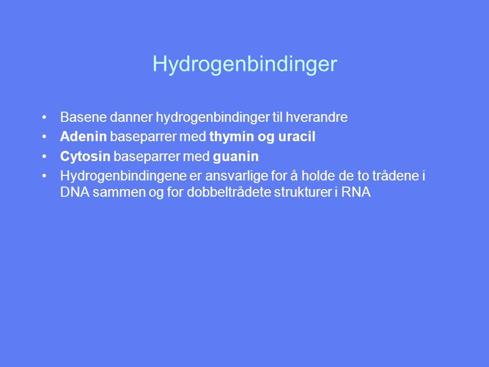 Hydrogenbindinger Basene danner hydrogenbindinger til hverandre Adenin baseparrer med thymin og uracil Cytosin baseparrer med guanin Hydrogenbindingen